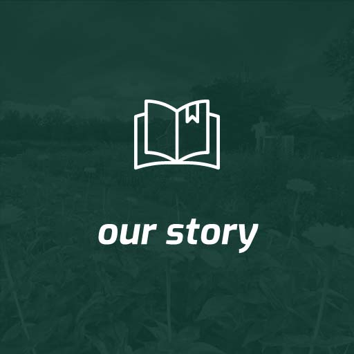 our story button green with white text