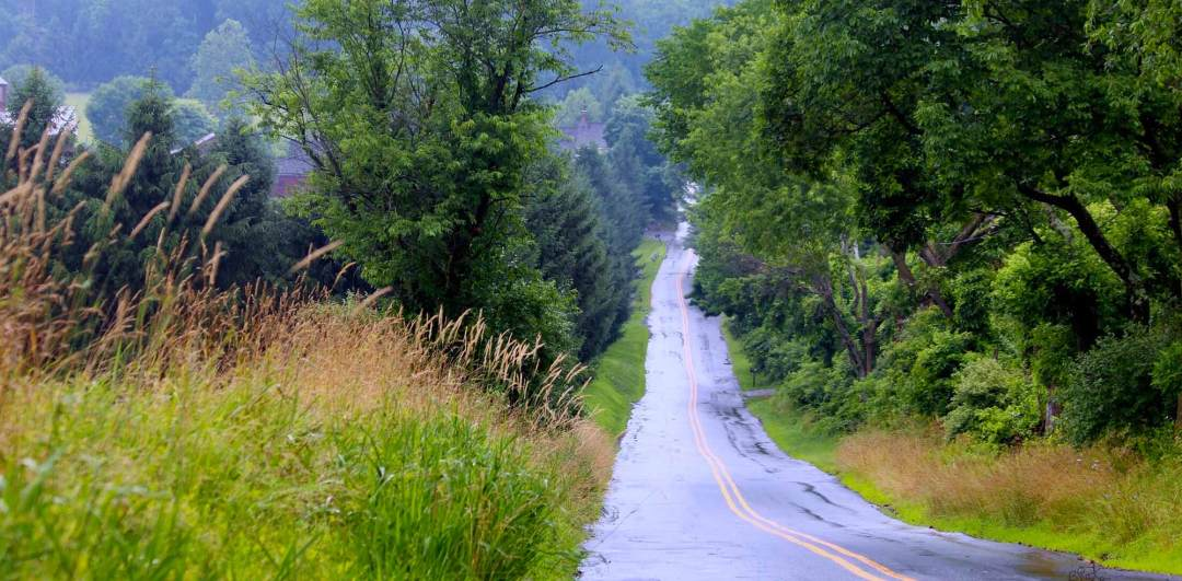 Long Winding Road In The Midst Of Trees And Vegetation On Hopewell Road In New Jersey About Us - Collaborative Initiative