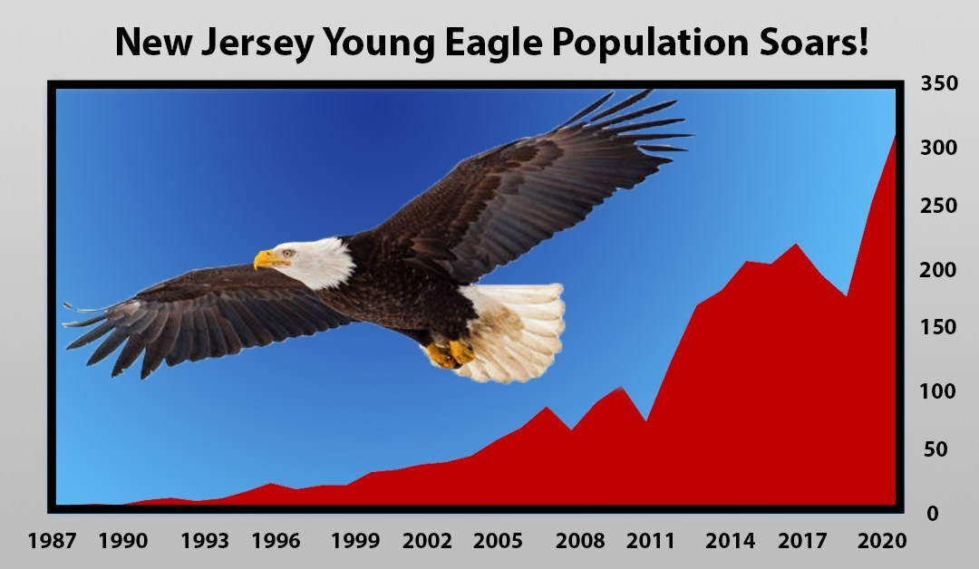 2020: Bad for Humans, Great for NJ's Bald Eagles