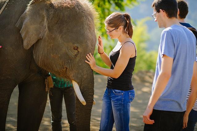 Voluntourism: Working with elephants in Thailand