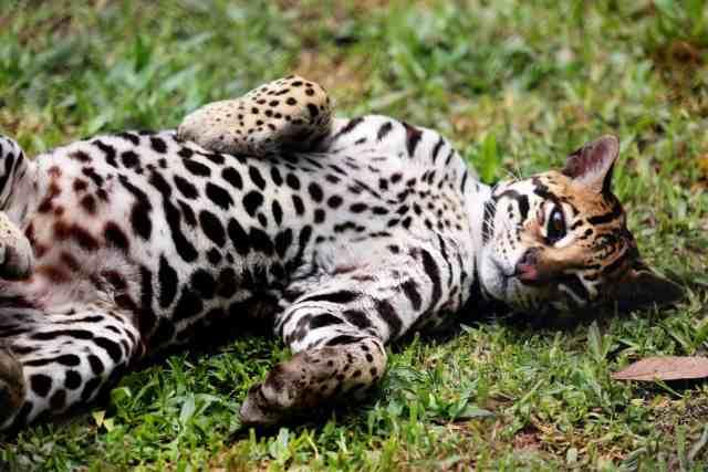 wildlife in Costa Rica
