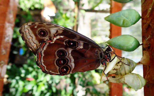 butterfly in belize ecotour