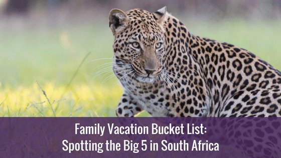 Family Vacation Bucket List: Spotting the Big 5 in South Africa