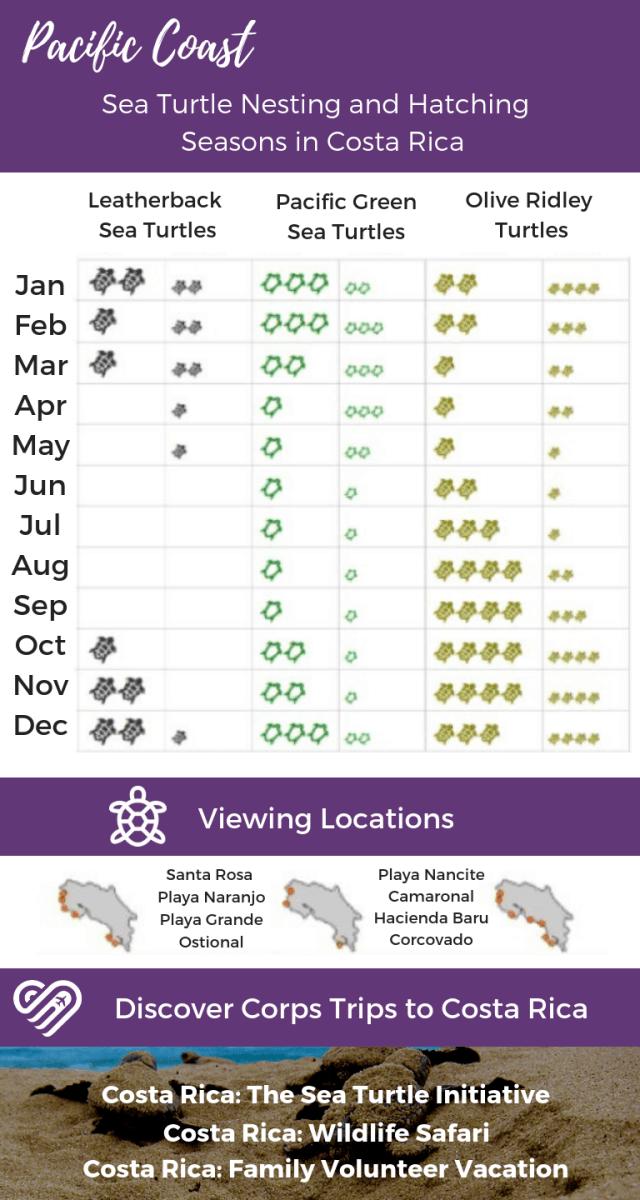 sea turtle nesting and hatching calendar