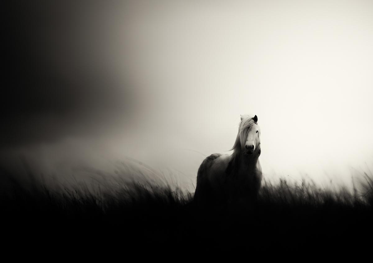Wild Horse on Mynydd Myddfai
