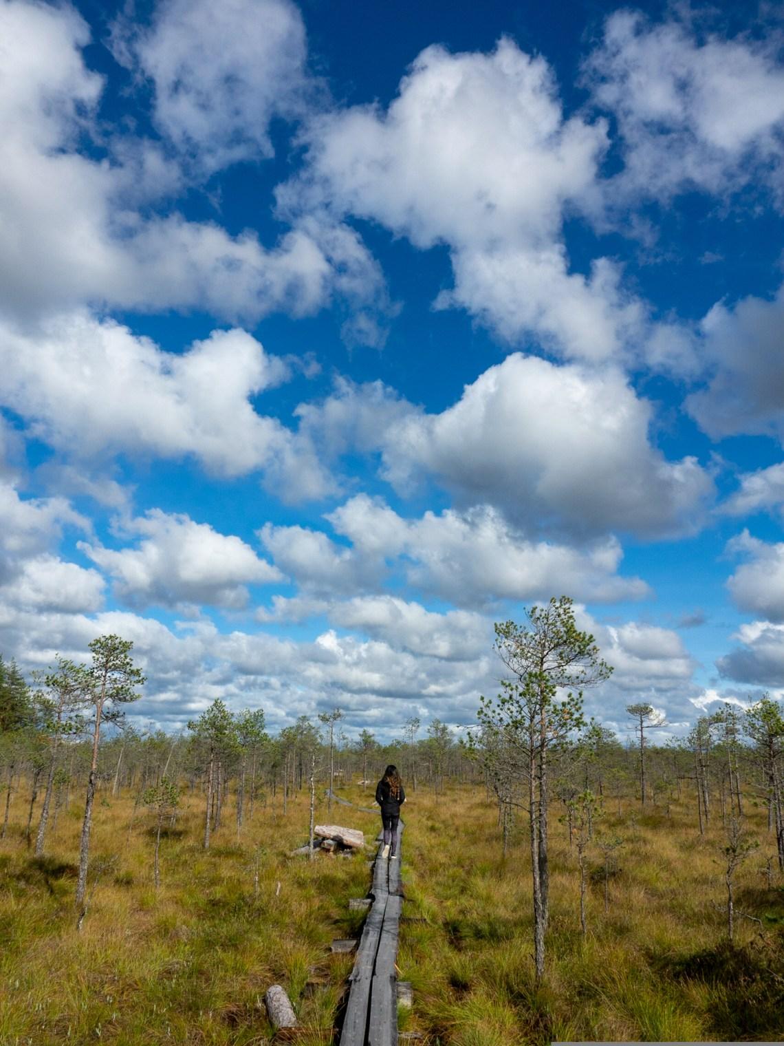 Living in Estonia - Hiking in Bogs