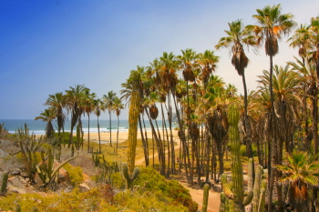 Las Palmas a seculed beach in Todos Santos where the desert meets the sea.