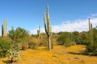 Desert with Wildflowers