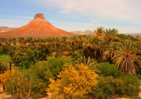 a cultivated oasis in el purisma withinin the xerbic shrubland environment of baja california sur
