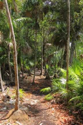 on the way to the swing bridge, this trail is an representative of a medium height deciduous forest
