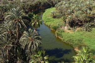 an oasis ecosystem in the desert environment of baja california sur
