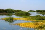 estuary ecosytem in the costal environment of San Jose