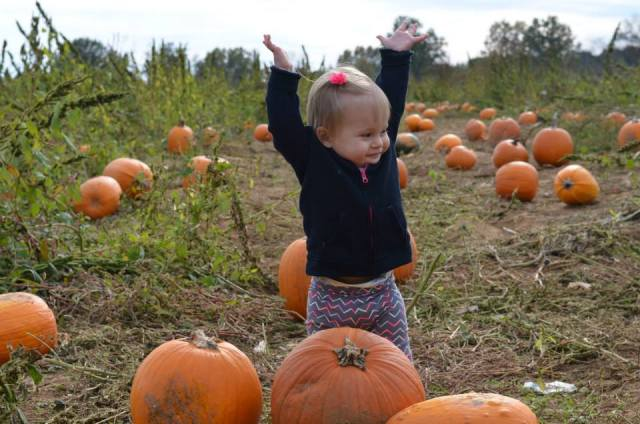 baby at the pumpkin patch