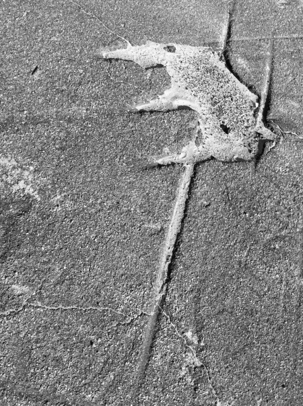 Cambrian Life Form, New London