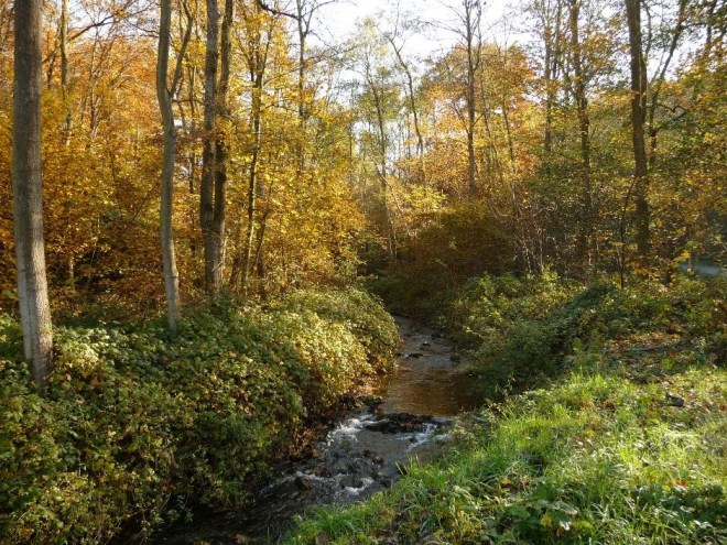 River Rau