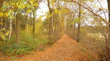Averbode forest