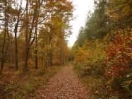 Walking through the woods near Averbode, Belgium
