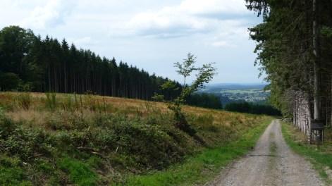 Forest near Masbourg
