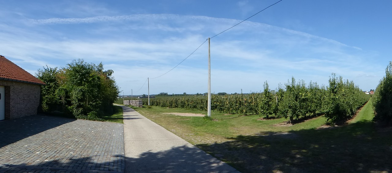 The orchards of the Haspengouw