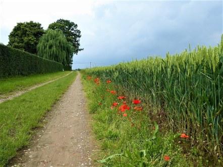 Broechem walk