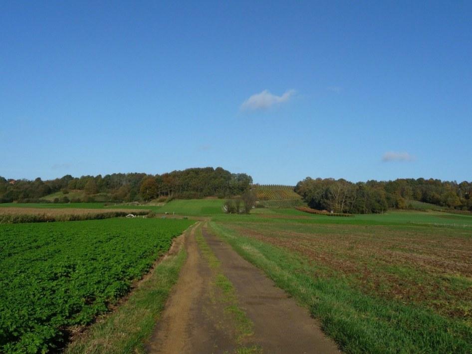 Walking around Nieuwrode, Belgium