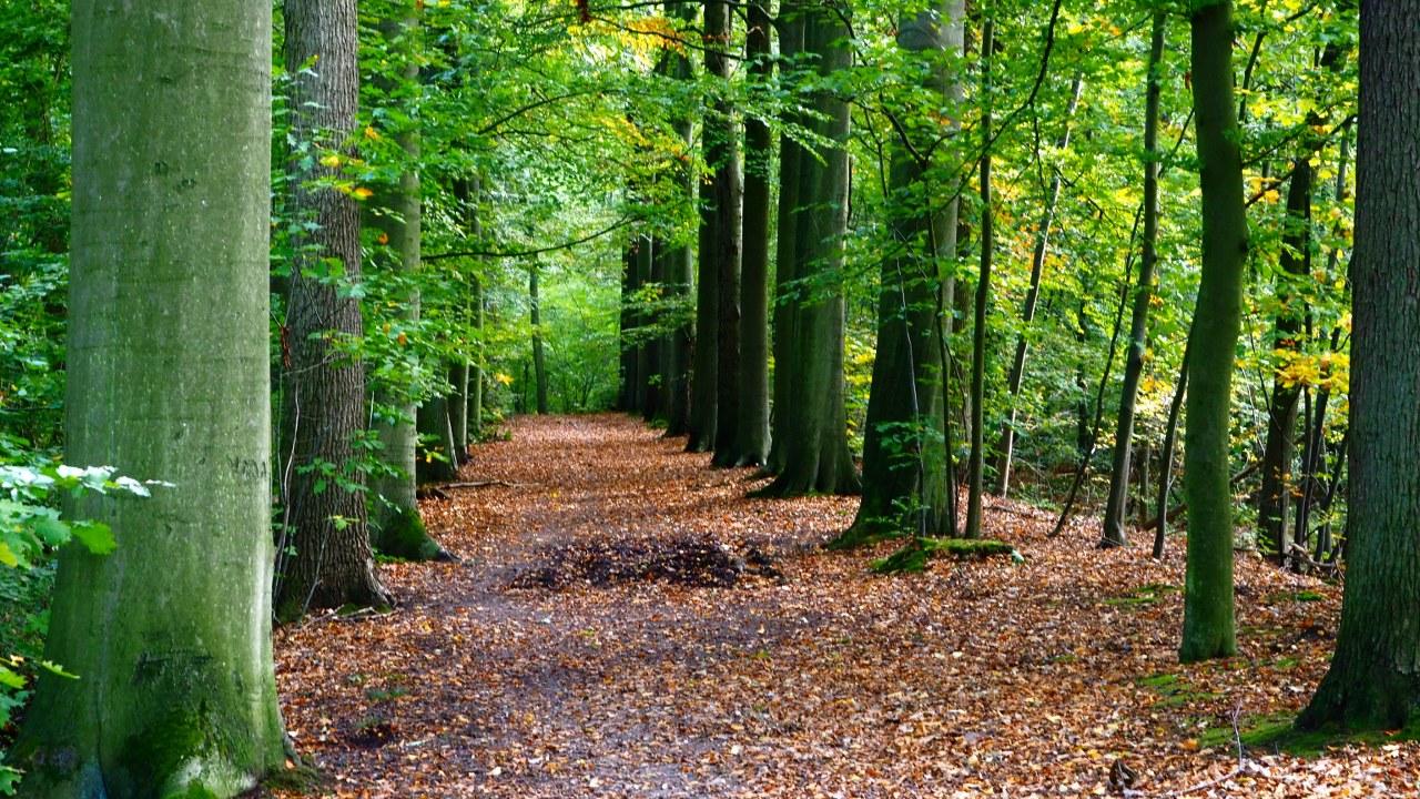 Walking around Sint-Piters-Rode