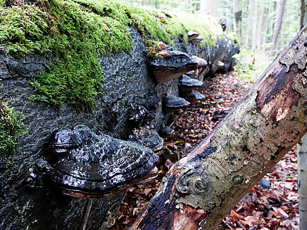 fungi growing on tree trunk