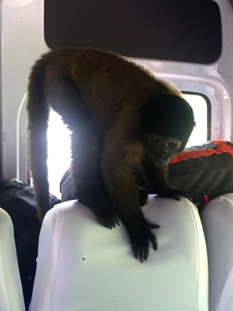 This monkey decided to hop on our bus (he even made it to the driver's seat
