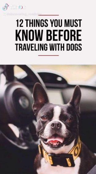 12 Things to Know Before Traveling With Dogs