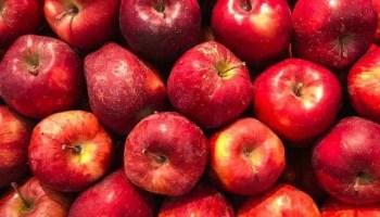 A is for Apple Preschool Unit