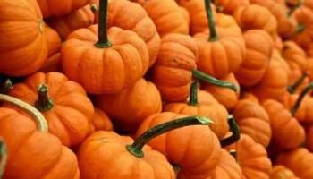Pumpkin Activities for Homeschool Preschool at Home: Week 9