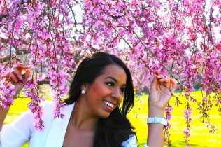 Cherry blossoms in D.C