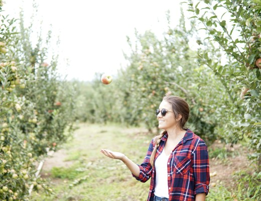 Mercier Orchards, Blue Ridge, GA - www.discoveringyourhappy.com