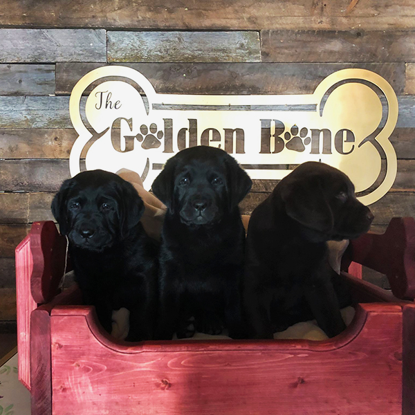 Dog grooming services from the Golden Bone in Calmar, AB
