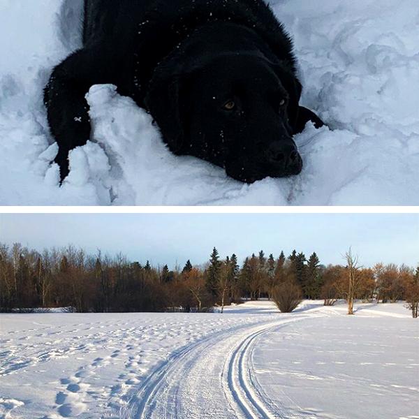 Top: Lead Groomer Toro - Photo Credits: Leduc Golf Club Bottom: Ski Trails at the Leduc Golf Course - Photo Credits: Leduc Golf Club (IG)