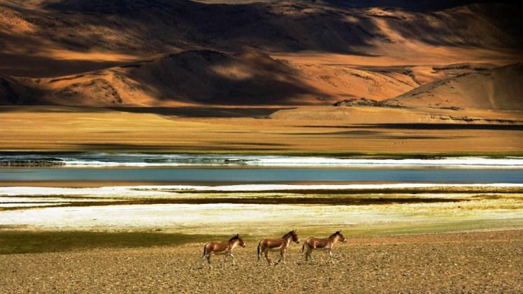 Tso Kar Lake Ladakh