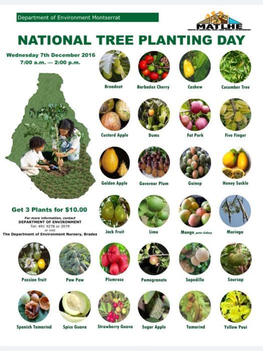 12-5-16-treeplanting