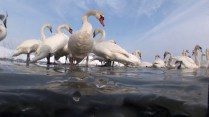 Elegant well mannered flock