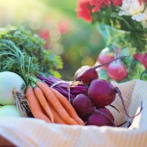 forestART Meal Options