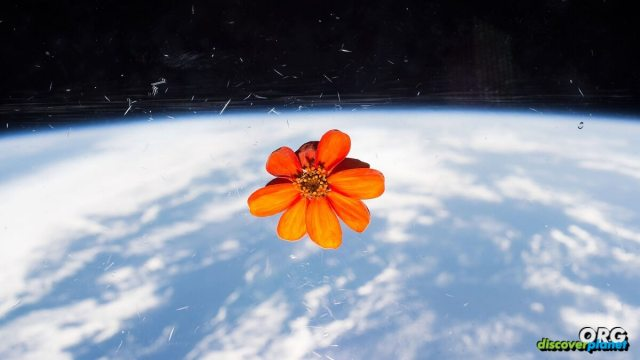 The best way to provide water and aeration to plants growing in space