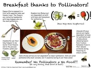 Pollinator Breakfast
