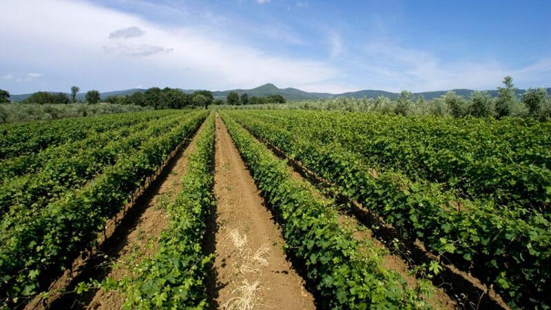Agriturismo Eucaliptus Bolgheri Tuscany