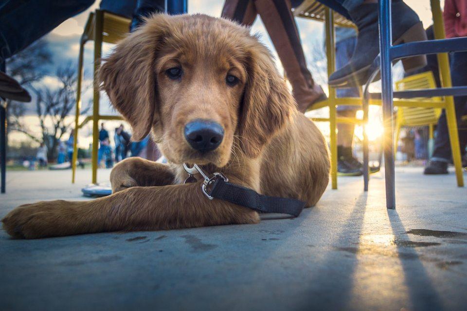 Dog-Friendly Sausalito Guide