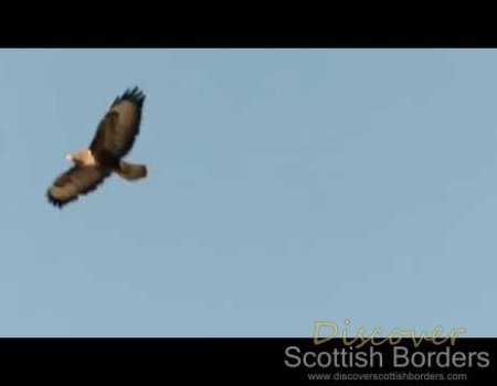 Shorts – Buzzard