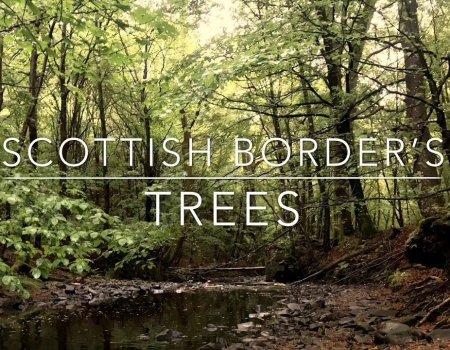 Scottish Borders Trees