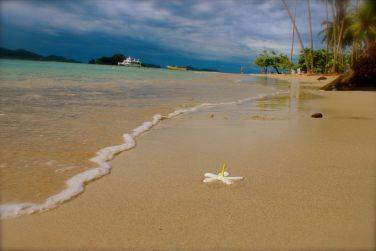 Tortuga Island Montezuma Costa Rica - 137