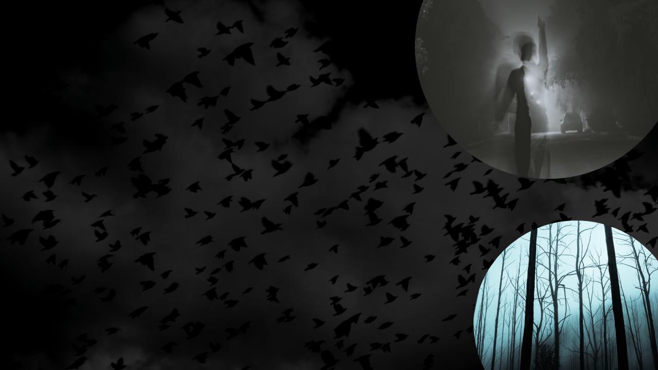 APO-21 Should I Celebrate Halloween (31)