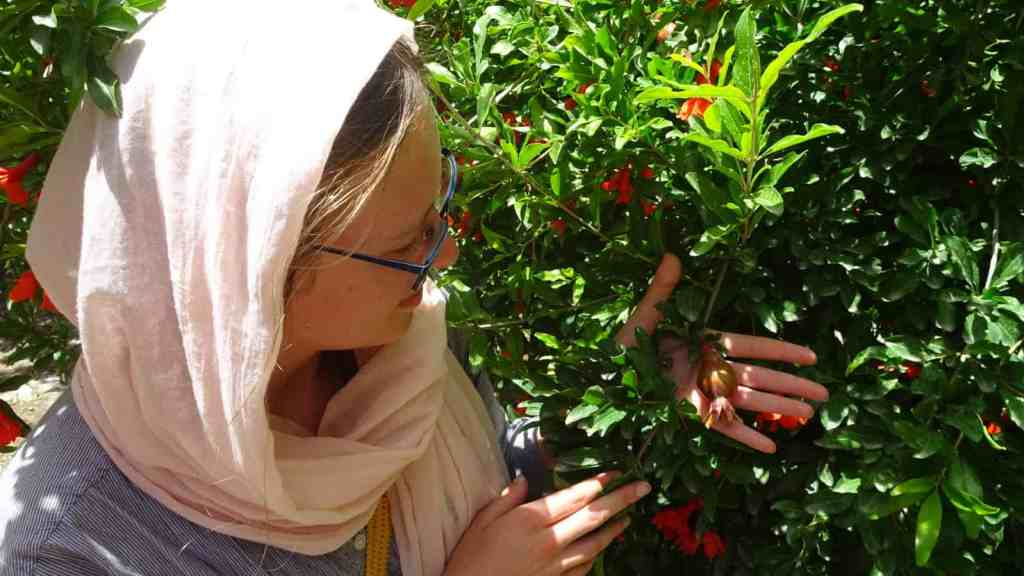 Admiring the pomegranates that grow on trees here :)