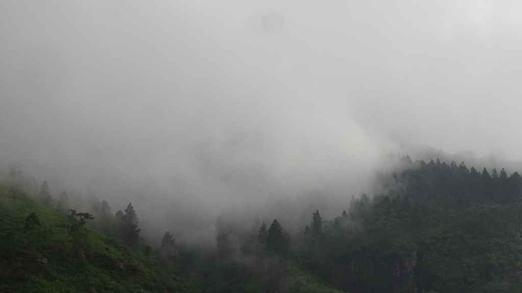 Nuwara Eliya Trees covered in clouds