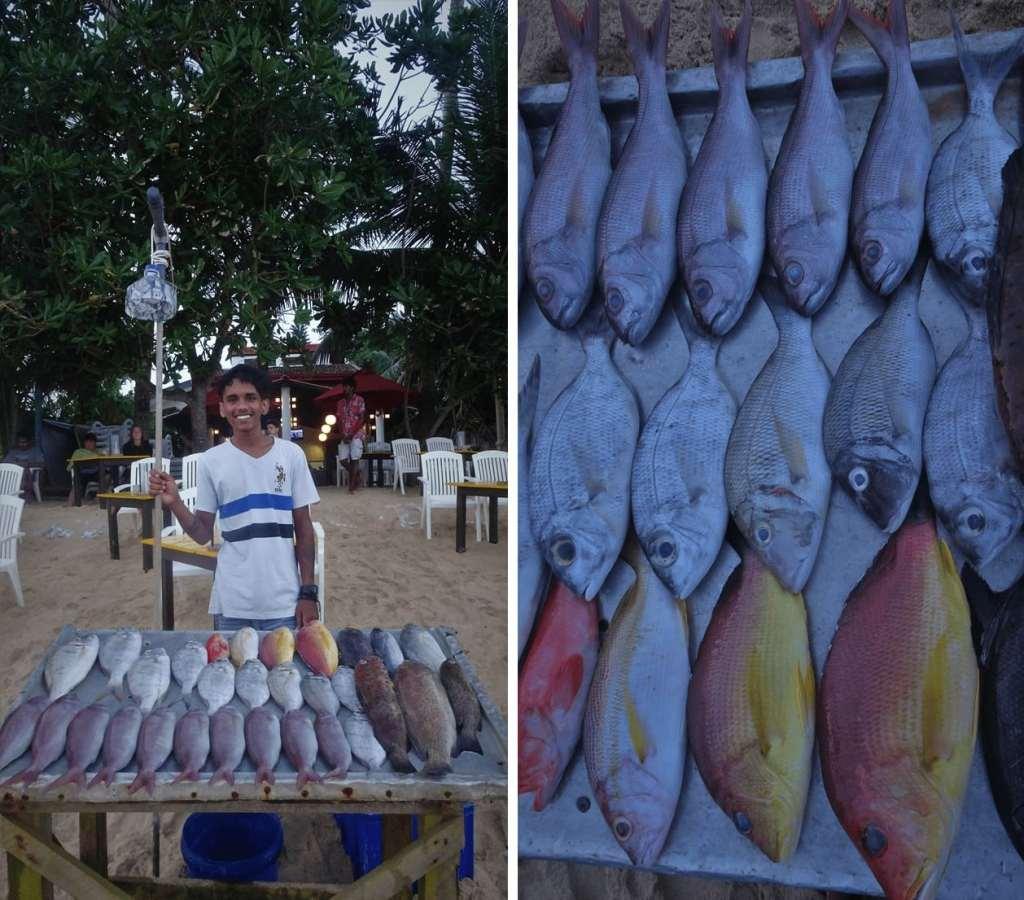 Food in Sri Lanka; Fresh Sea Food